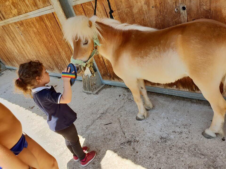 il nostro paddock per cavalli
