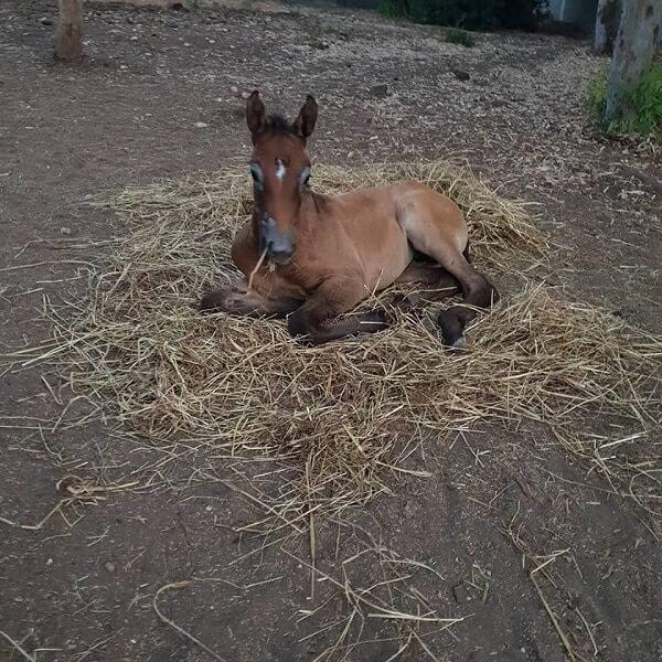cavallo appena nato