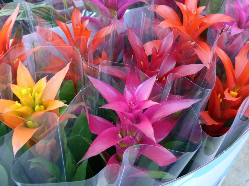coltivazione fiori sassari