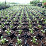 cura delle piante sassari