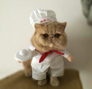 gatto cuoco