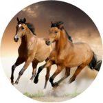 Maneggio cavalli Sassari