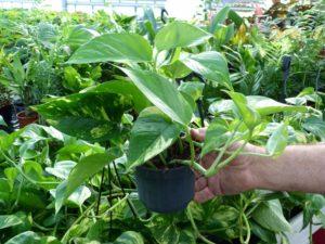 piante da appartamento vivai sassari