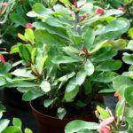 piante da appartamento sassari