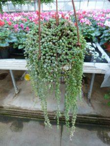 piante sassari