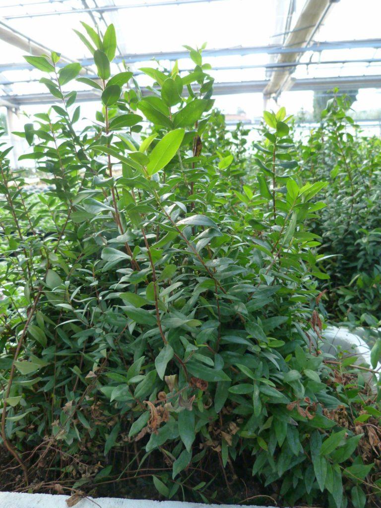piante vivai sassari