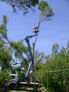 manutenzione alberi sardegna